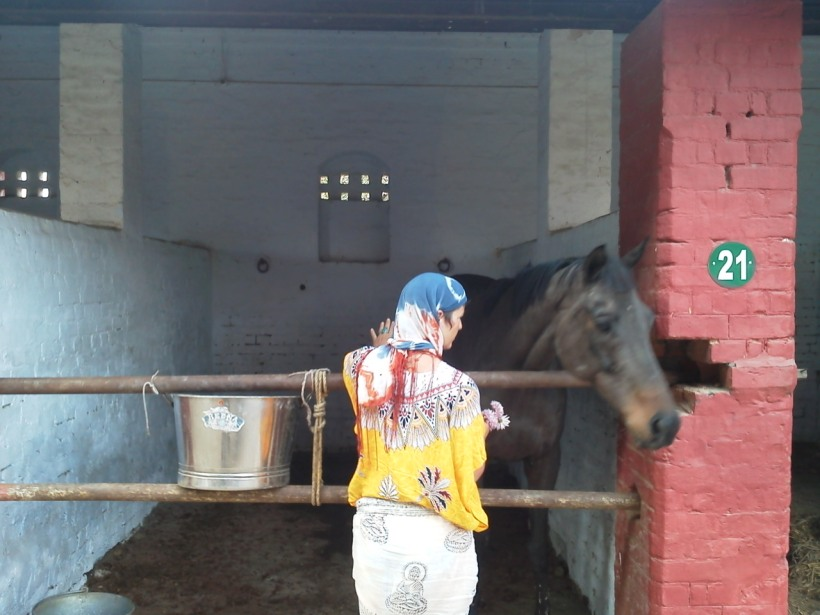 Lucknow Horse