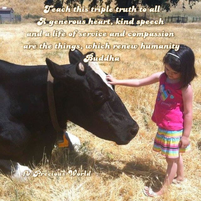 child with cow buddha quote