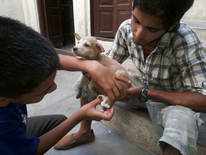 youth doctoring puppy
